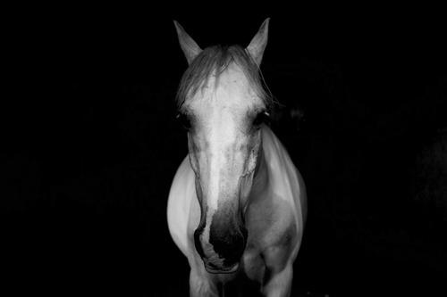 Белая лошадь и чёрная лошадь