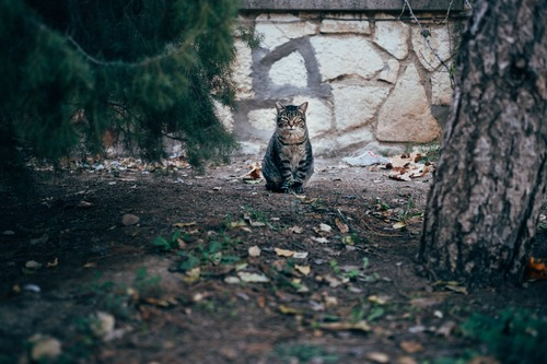 Хозяйка кошки-мема Grumpy Cat выиграла суд