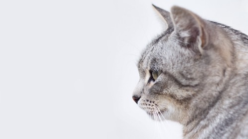 Kitekat  vs Mrcat