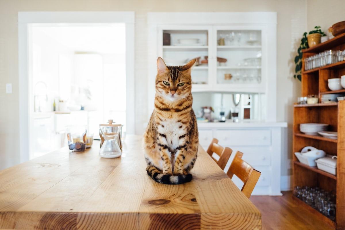 Йошкин кот