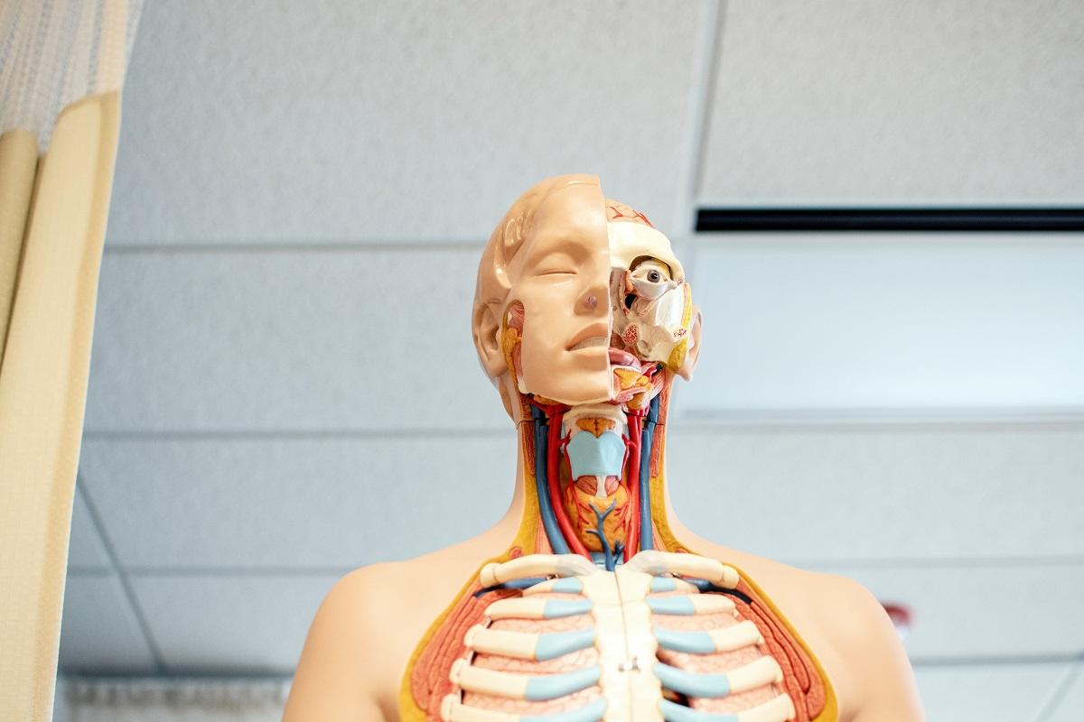 Элемент анатомии как объект авторского права